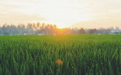 Engrais de gazon 2020: Test et recommandations