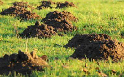 Répulsif à taupe naturel 2020: Test et recommandations