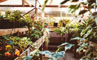 Serre de jardin: Test et recommandations (03/20)