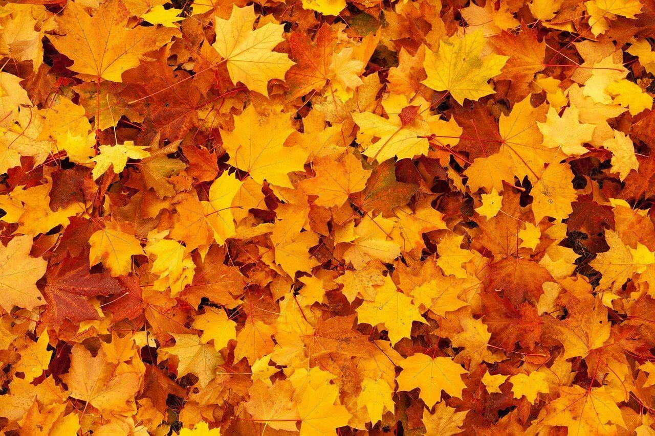 souffleur aspirateur de feuilles sur batterie sans fil FAQ