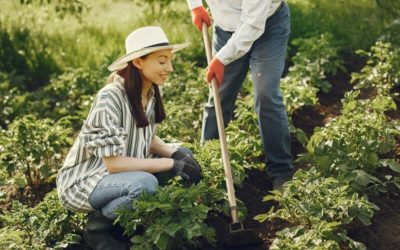 Meilleure Houe de Jardin Mai 2021: Test et Comparatif