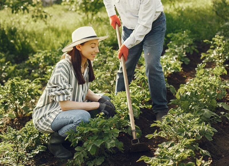 Houe de jardinage