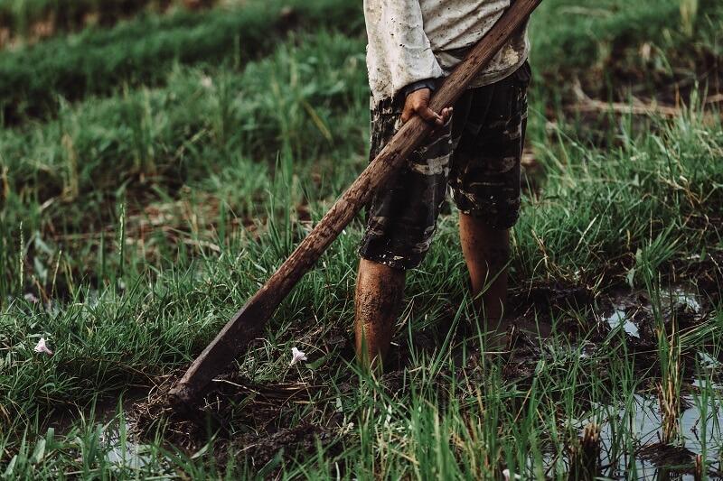Image d'un homme qui utilise une houe