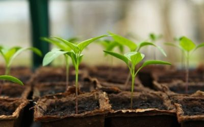 3 étapes pour bien préparer son jardin avant la semence