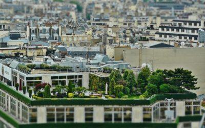 Comment délimiter et protéger du vis-à-vis un jardinet ou une terrasse ?