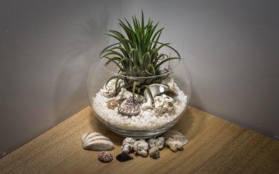 Terrariums pour plantes d'intérieur : utilisation de terrarium dans votre maison