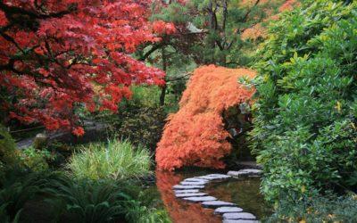 Comment créer un petit jardin japonais ?